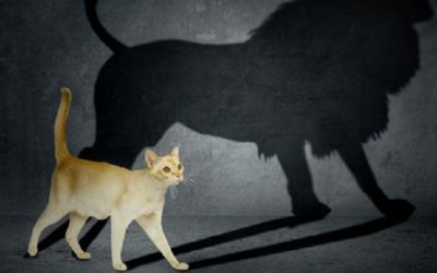 Great Leaders Manage Perceptions: Managing Biases